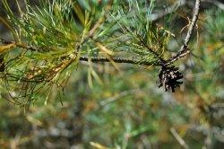 Świat roślin w gminie Biskupiec